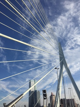The Erasmus bridge in Rotterdam.